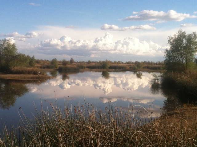 City of Davis Wetlands