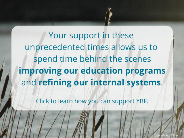 Support YBF – general2