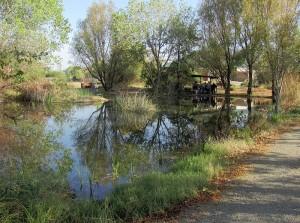 Yolo Basin Foundation Demonstration Wetlands