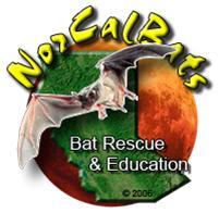 NorCal Bats logo