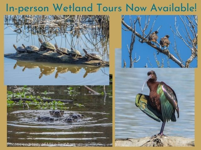 In-person Wetland Tours Now Available!
